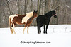 Horses in the Snow, Richland County, Wisconsin