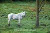 White Horse at Dawn, Juneau County, Wisconsin