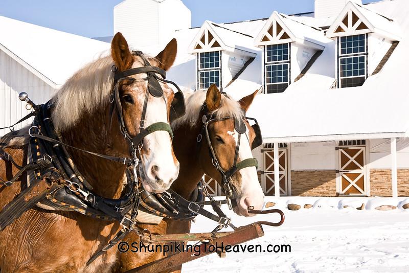 Christmas at Smokey Hollow Farm, Columbia County, Wisconsin