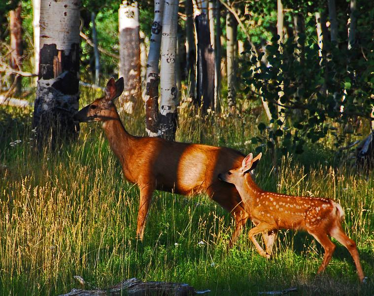 Stay Close, Deer in Southern Utah
