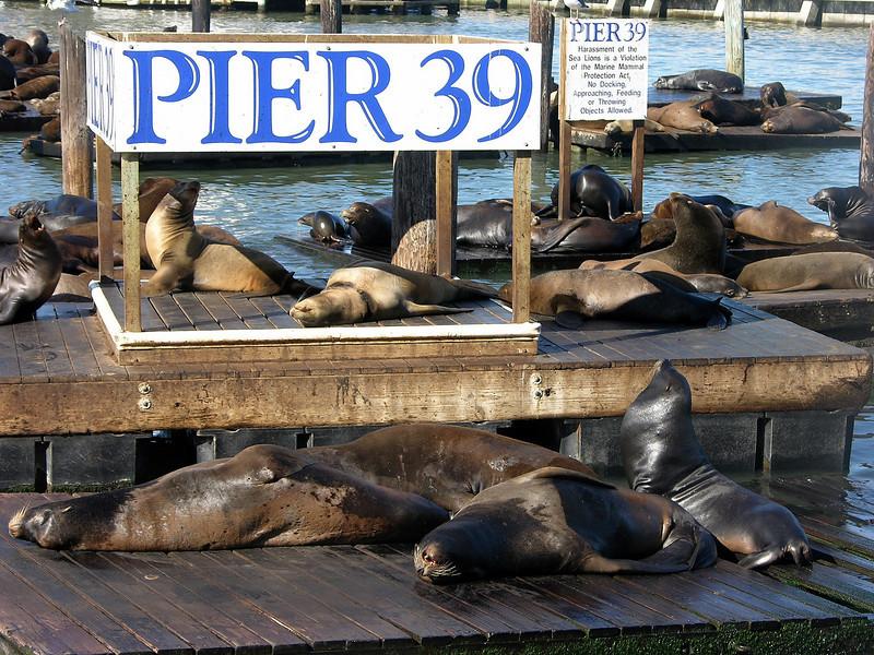 Pier 39 at Fisherman's warf