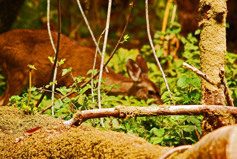 Miur Woods