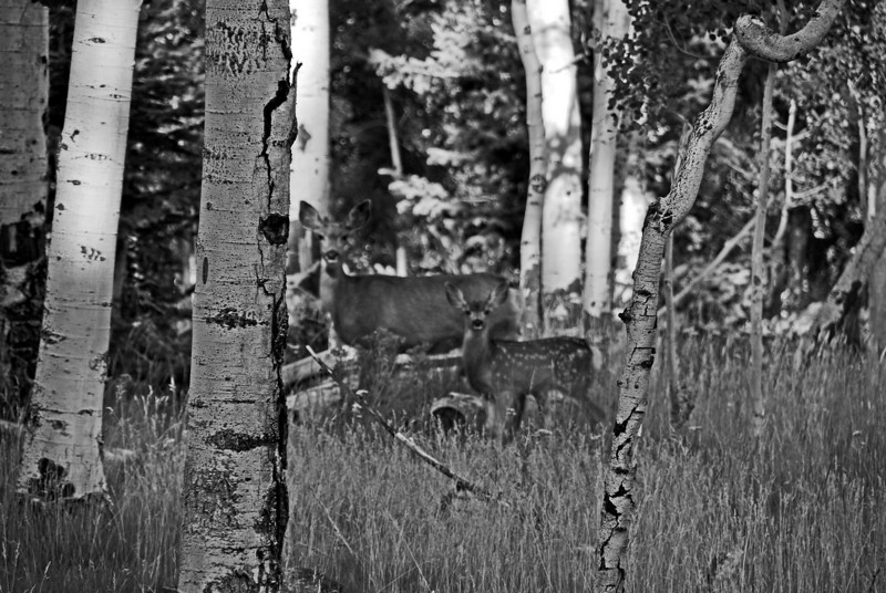 Bambi, Southern Utah