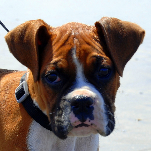 Dog Beach at Ocean