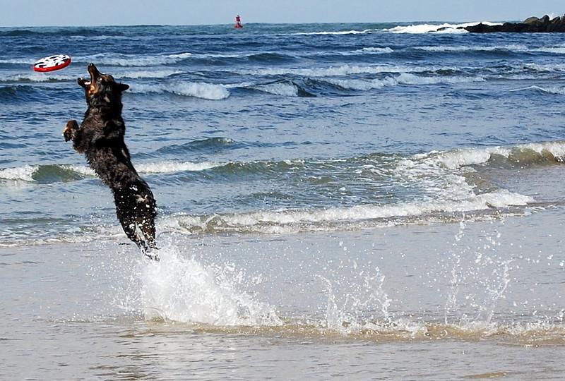 Dog Beach near Ocean Beach in San Diego