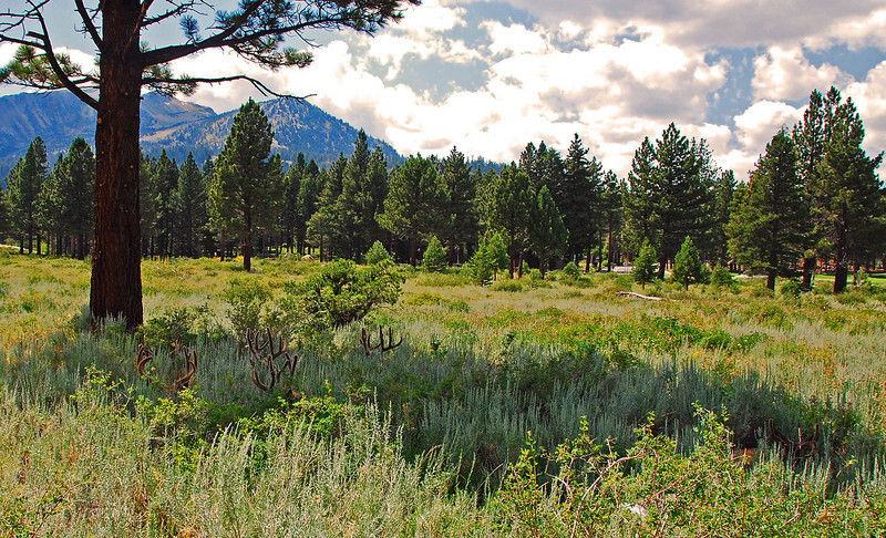 Deer Garden in Mammoth Lakes,  Can you see the deer?