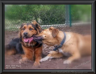 Walter Fuller Complex Dog Park 021409_00056