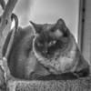 Paws (photo5,fsc)2018-04-21--2