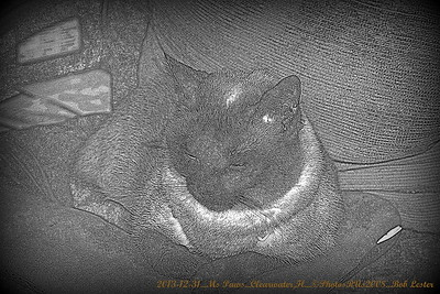 2013-12-31_Ms Paws_IMG_2902_
