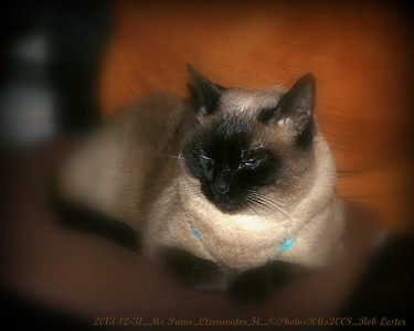 2013-12-31_Ms Paws_IMG_2904_