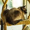 paws    (warbler,exp)   2018-03-06-3060013