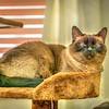 Ms Paws- 2018-08-05--00864_BOB Hint of mod,lighting effs med,colorsat62