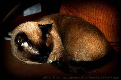 2013-12-31_Ms Paws_IMG_2896_