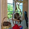2011-08-12_P1040009_Paws