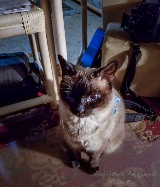 Ms Paws,early morning helper(3c workfl)   2018-03-21-052356