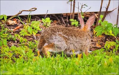 P5240103_rabbit