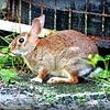 2016-09-03_20160903-P9030035_ rabbit