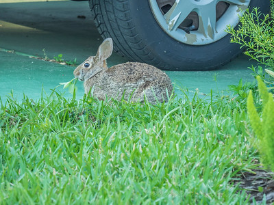 2019-04-16_m1 iso400 ap F8  rabbit__4160025