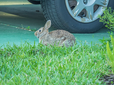 2019-04-16_m1 iso400 ap F8  rabbit__4160028