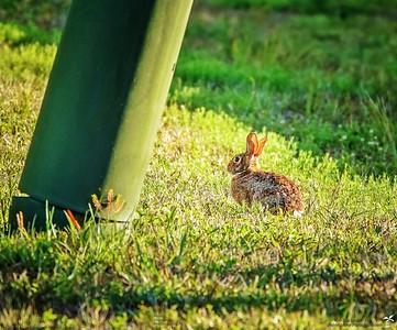 002_rabbit_20210508