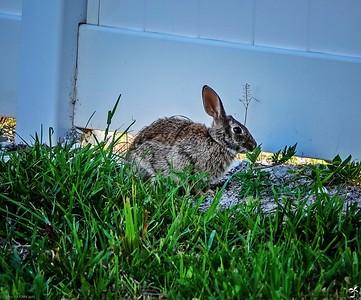 004_rabbit_20210508