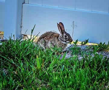 003_rabbit_20210508