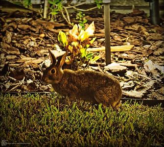 PA110007_rabbit 414