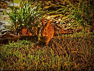 PA110009_rabbit 414