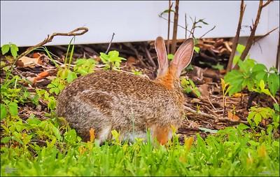 P5240102_rabbit