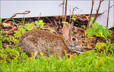 P5240101_rabbit
