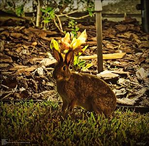 PA110005_rabbit 414