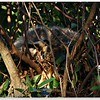 Feb 18,2013_IMG_7483_Racoon back yard