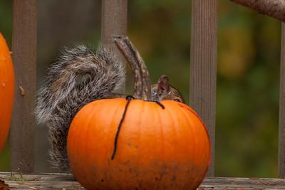 Pumpkin, 2012