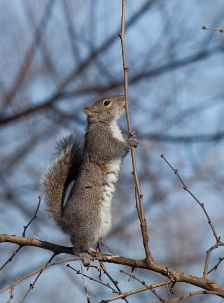 Squirrel standing in a tree