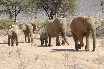 Samburu National Reserve Kenya 2011
