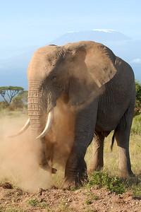 Amboseli National Park Kenya 2006