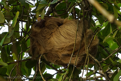 Sleeping in the Upper Limbs
