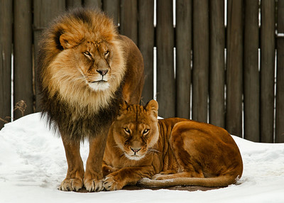 The King and Queen of the Cleveland Zoo.