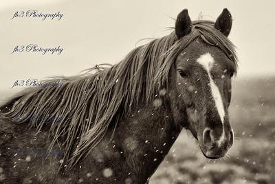 Wild Horse Mesa - Southern Colorado