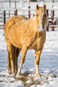 Goldie In Snow