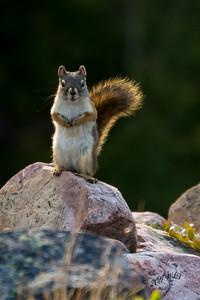 Bring Any Nuts??