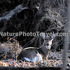 Doe: taken during hike at John Heinz Wildlife Refuge, Philadelphia, PA