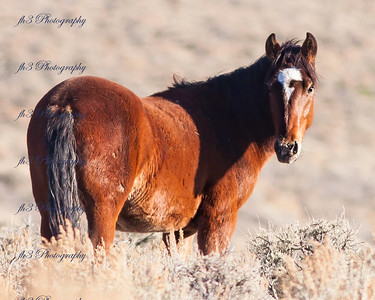 wild horse from southern Colorado