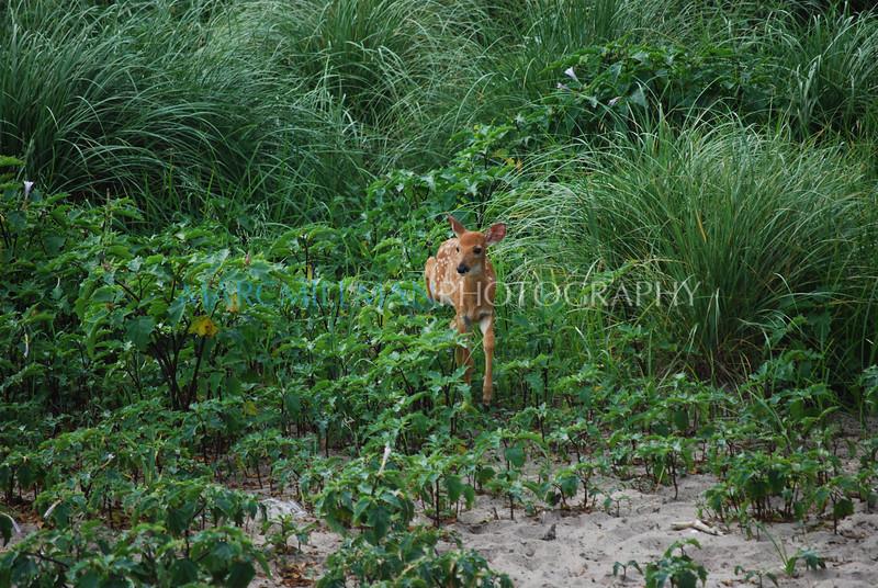Bambi (Sun 7/6/08)