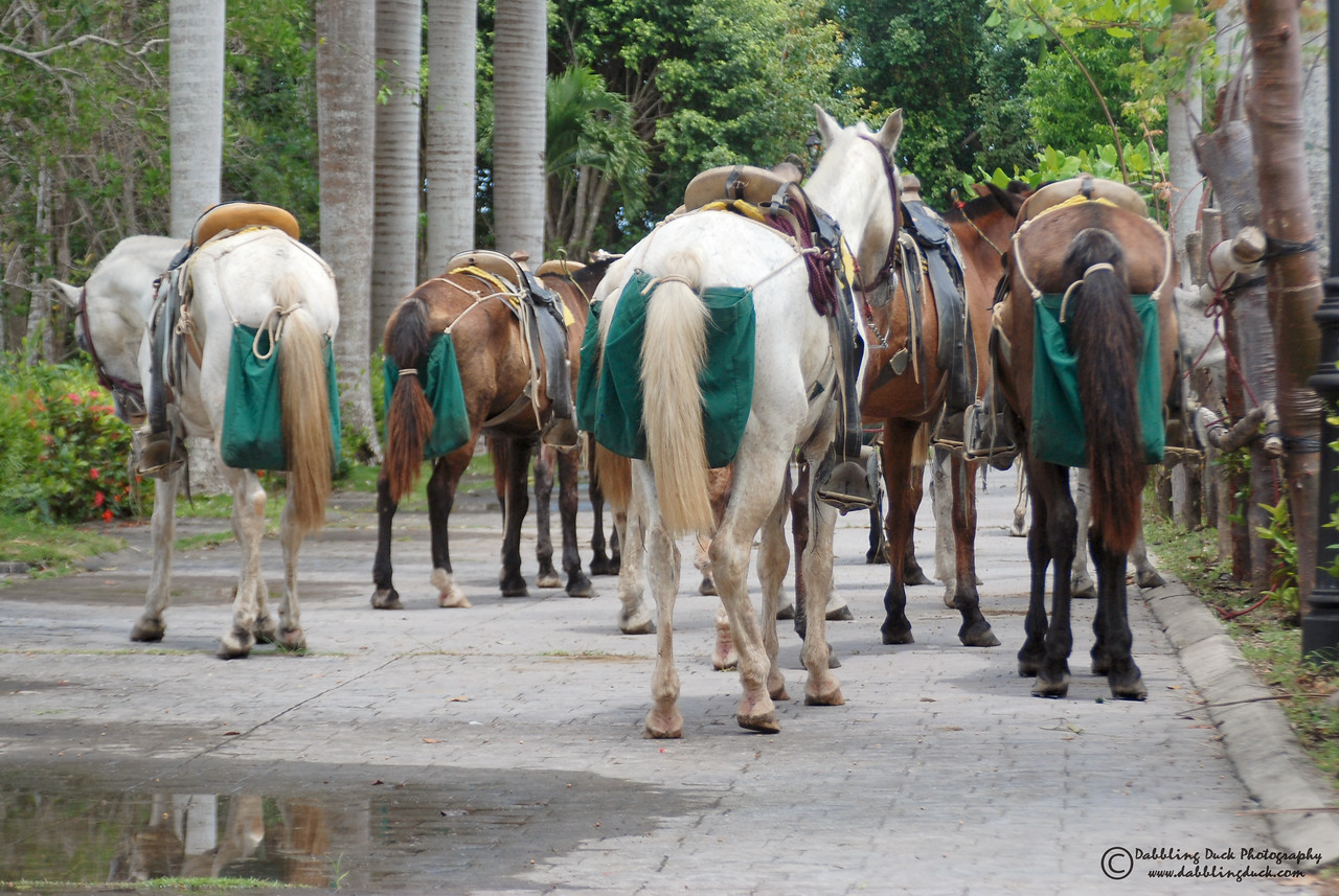 Guatemala.  Horse butts - what more can be said?