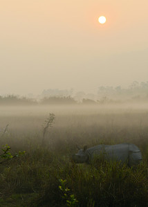 Rhino at Sunrise...