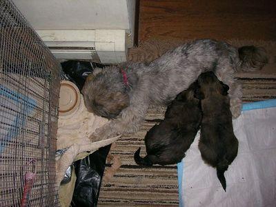 Bonnie's Pups