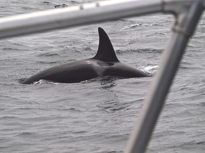 The Orca Watching Trip
