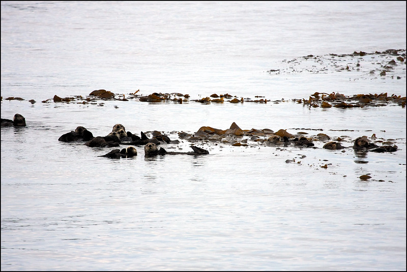 Alaska-Sitka(edit)_0019