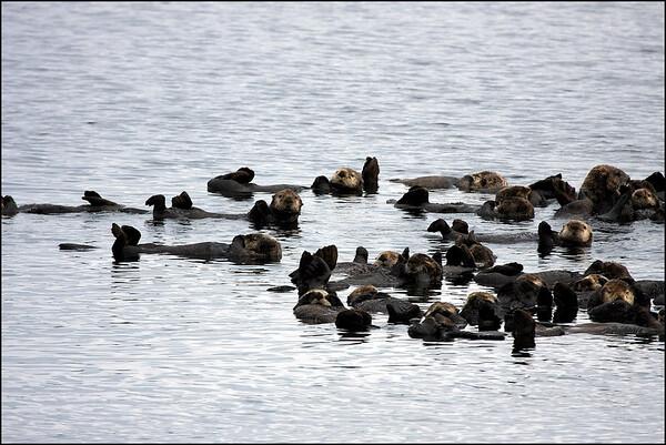 Alaska-Sitka(edit)_0089